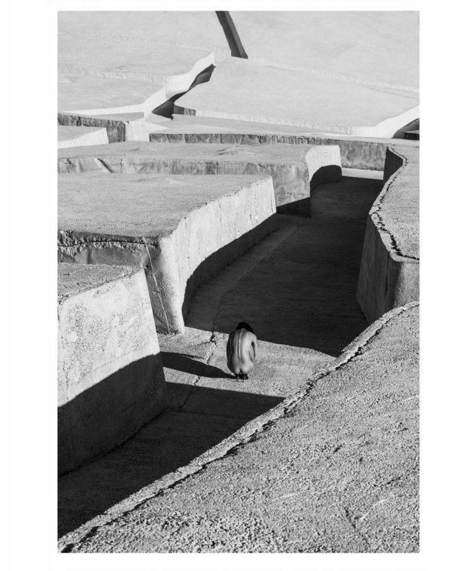 Vivid-Gallery-Szymon-Brodziak-Labirynt-#01